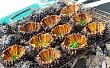 5 món hải sản ở Lý Sơn làm say lòng du khách