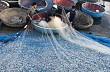 Chèo thúng đi đánh cá cơm quế đảo Lý Sơn