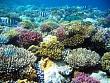 Đảo Lý Sơn đang Phục hồi và bảo tồn rạn san hô