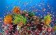 Đảo Lý Sơn lập khu bảo tồn biển gần 8.000 ha