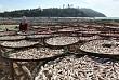 Hải sản khô của biển đảo Lý Sơn