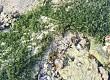 Khám phá cá biển Lý Sơn dưới lòng đại dương