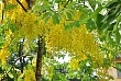 Lý Sơn- Quảng Ngãi con đường của những sắc hoa