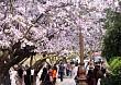 Những điểm đến tuyệt đẹp không thể bỏ qua trong tháng 3 ở Việt Nam