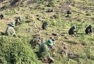 Bộ đội khoét đá để phủ xanh cho núi trên đảo Lý Sơn