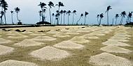 Cát bụi vùng biển đảo Lý Sơn