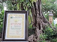 Đảo Lý Sơn được công nhân 2 cây di sản trên đảo