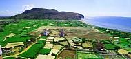 Đảo Lý Sơn như một bức tranh đa sắc màu