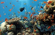 Lý Sơn cần bảo tồn môi trường sinh thái vùng địa chất
