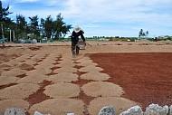 Nổi lo thiếu cát trắng của người trồng tỏi Lý Sơn