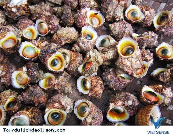Ốc xà cừ đặc sản đảo Lý Sơn